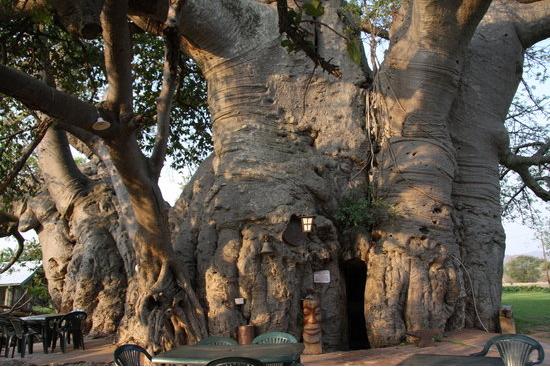 barul-baobab